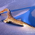 Island Driftwood by Al Powell Photography USA