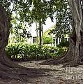 Island Style Living by Carol  Bradley