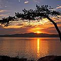 Island Sunrise by Inge Riis McDonald