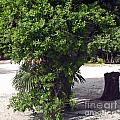 Island Tree by Katherine Williams