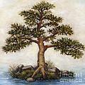 Island Tree by Randy Wollenmann