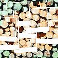 Isn't It Good Norwegian Wood by Steve Taylor