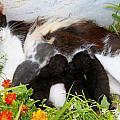 Cat With Kitten by Augusta Stylianou