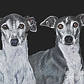 Italian Greyhounds Portrait Over Black by Kate Sumners