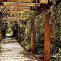 Italian Pergola Hallway by Amy Lucid