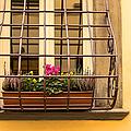 Italian Window Box by Prints of Italy