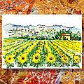 Italy Sketches Sunflowers Of Tuscany by Irina Sztukowski