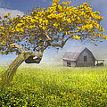 It's A Beautiful Day by Debra and Dave Vanderlaan