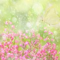 It's A Beautiful Day... by Delphine Devos
