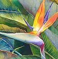 Its A Bird by Judy Mercer