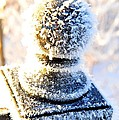 It's A Bit Nippy Out by Terri Gostola