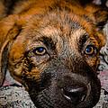 Its A Dogs Life by Ronny Sczruba