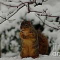 It's Cold Outside by Kitrina Arbuckle