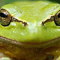 It's Not Easy Being Green _ Tree Frog Portrait by Roeselien Raimond