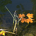 It's Over - Leafs On Pond by Brenda Brown