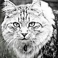 Ivan_1 by Michael Deegan