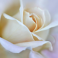 Ivory And Pink Abstract Rose Flower by Jennie Marie Schell