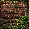 Ivy And Bricks by Mike Oistad