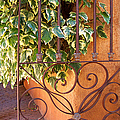 Ivy And Old Iron Gate by Ben and Raisa Gertsberg
