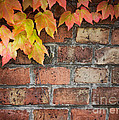Ivy Over Brick Wall by Mythja  Photography
