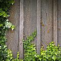 Ivy Wall Frame by Tim Hester