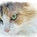 Izzy's Eyes by Anita Hubbard