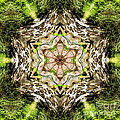Jack In The Pulpit Mandala by Susan Bloom