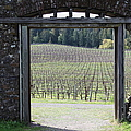 Jack London Ranch Winery Ruins 5d22132 by Wingsdomain Art and Photography