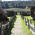 Jack London Ranch Winery Ruins 5d22180 by Wingsdomain Art and Photography