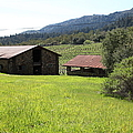 Jack London Stallion Barn 5d22058 by Wingsdomain Art and Photography