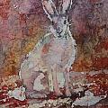 Jack Rabbit by Ruth Kamenev