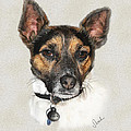 Jack Russell Terrier by Sarah Dowson