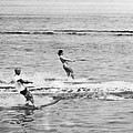 Jackie & John Glenn Water Ski by Underwood Archives