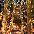 Jacobs Ladder by John Malone