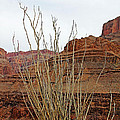 Jacob's Staff Grand Canyon by Debbie Oppermann
