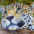 Jaguar Big Cat Original Oil Painting Hand Painted 8 X 10 By Pigatopia by Shannon Ivins