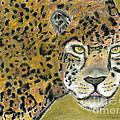 Jaguar by David Jackson