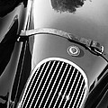 Jaguar Hood Emblem - Grille by Jill Reger