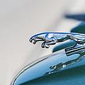 Jaguar by Paulo Goncalves