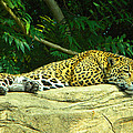 Jaguar by Phillip W Strunk