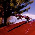Jaguar by Rona Black