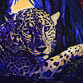 Jaguar- The Spirit Of Belize by Jane Schnetlage