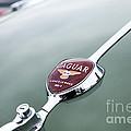Jaguar Xk 140 by Jim Orr