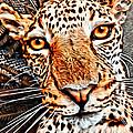 Jaguareyes by Alice Gipson