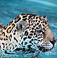 Jaguars Love To Swim by Sabrina L Ryan