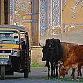 Jaipur by Louise Morgan