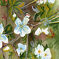 Jane's Apple Blossoms 1 by Judith Rice