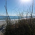 January On A Florida Beach by Tiffney Heaning