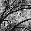 January Tree by Kirk Griffith