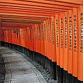 Japan, Red Columns Along Pathway Kyoto by Jim Julien